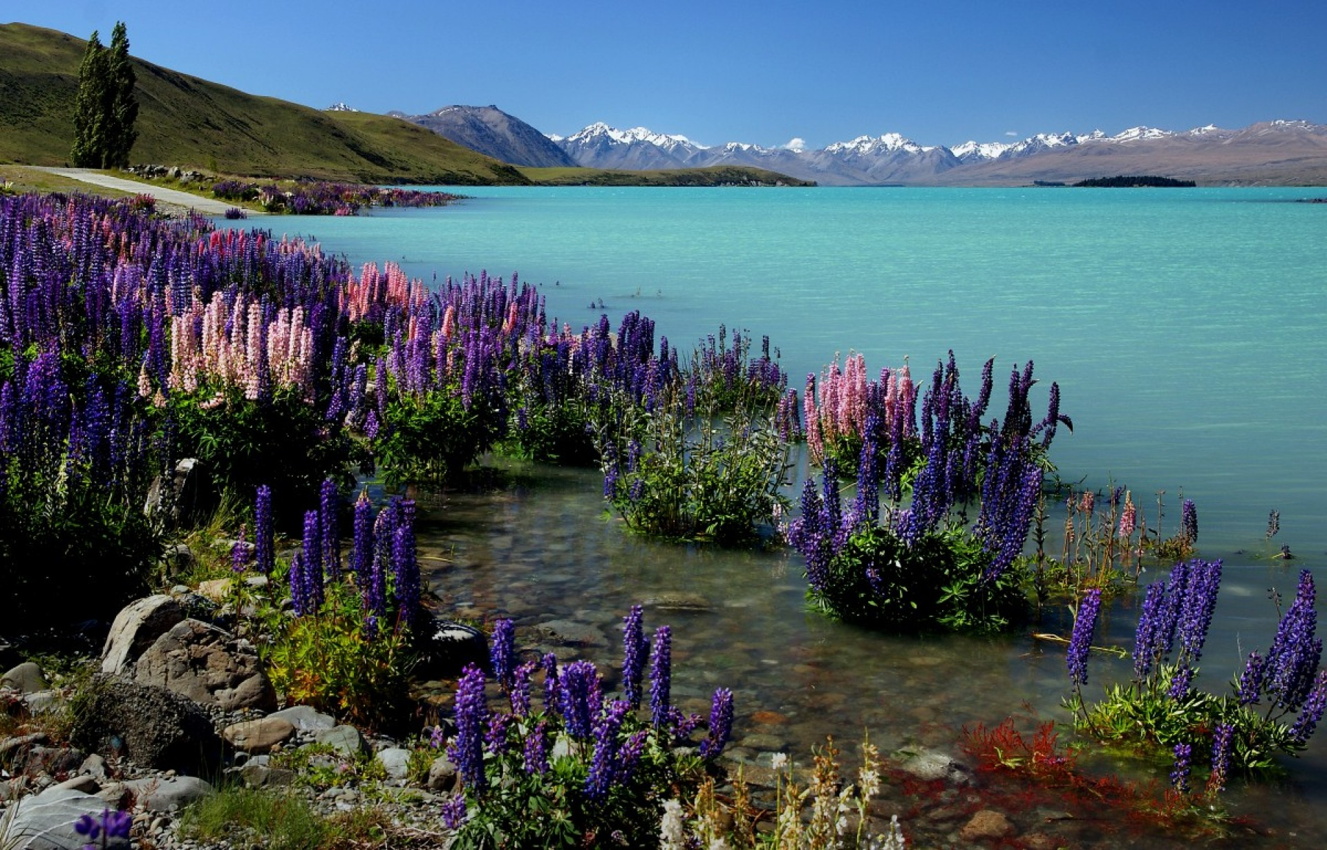 MacKenzie Country - 5 Star Peppers Blue Water Resort,  Mount Cook National Park, Wanaka & Much More
