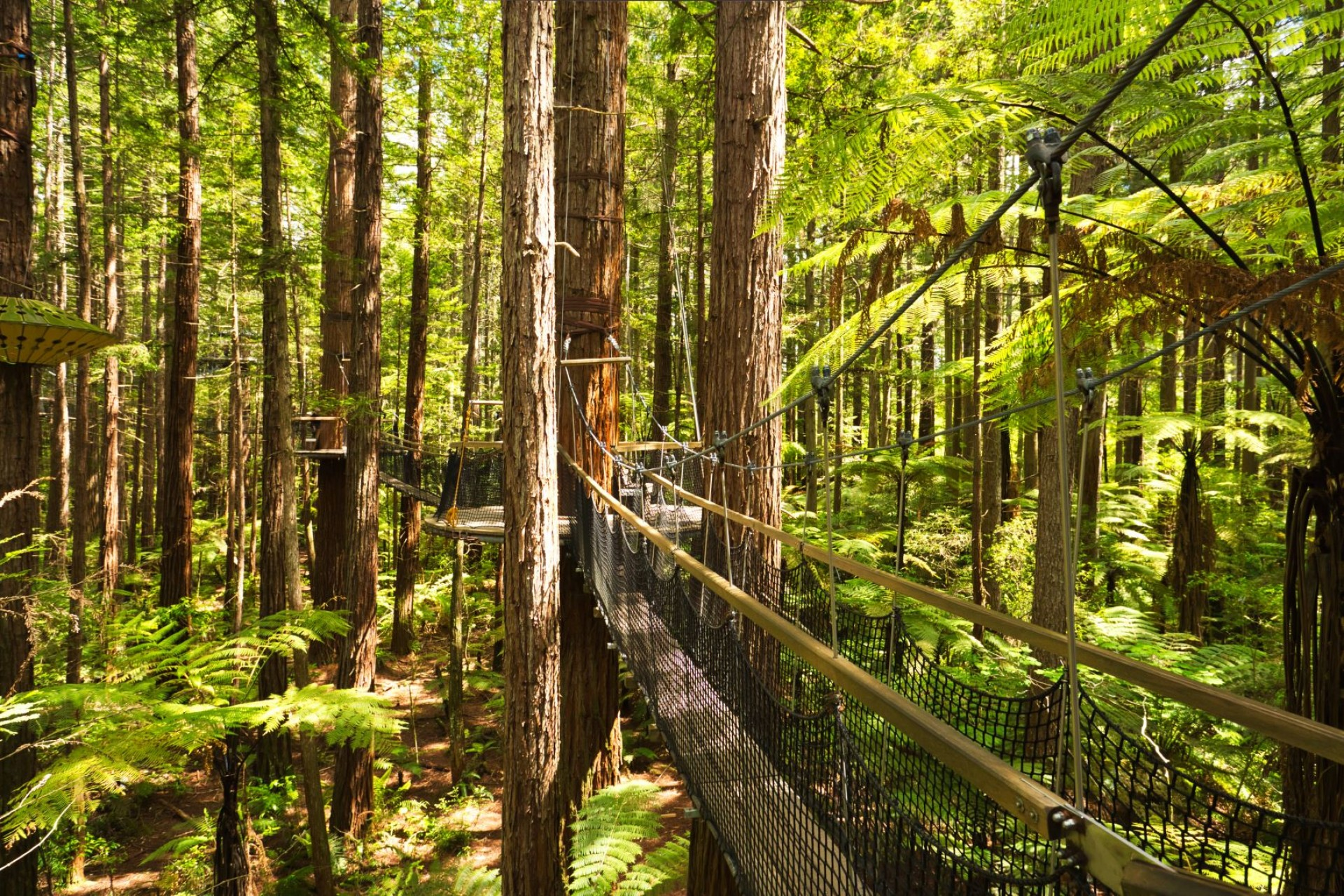 Redwood Canopy Walk Amongst The Gentle Giants