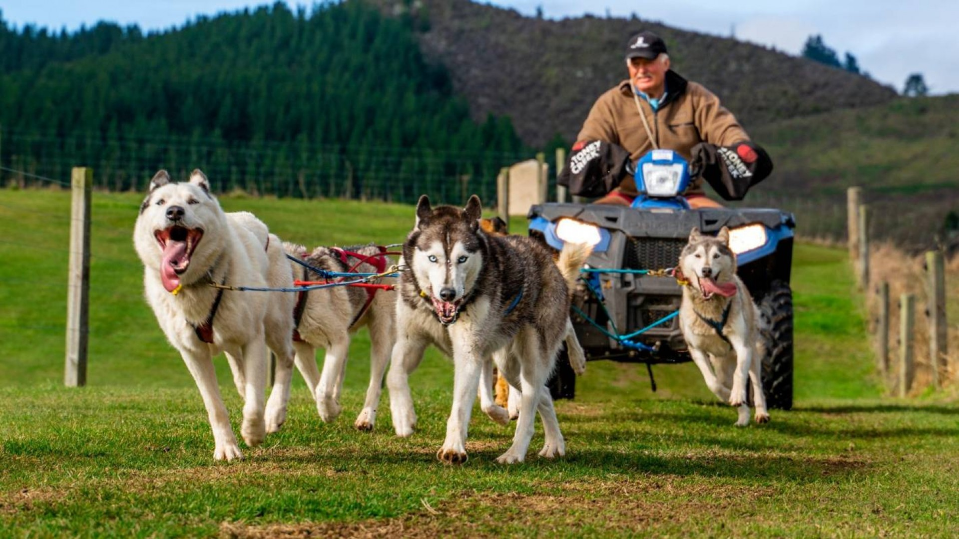 The Sled Dogs – From Siberia to Central Plateau
